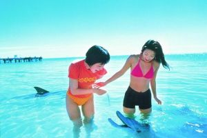 Monkey Mia Dolphins  Shark Bay Air Tour From Perth - Attractions Melbourne