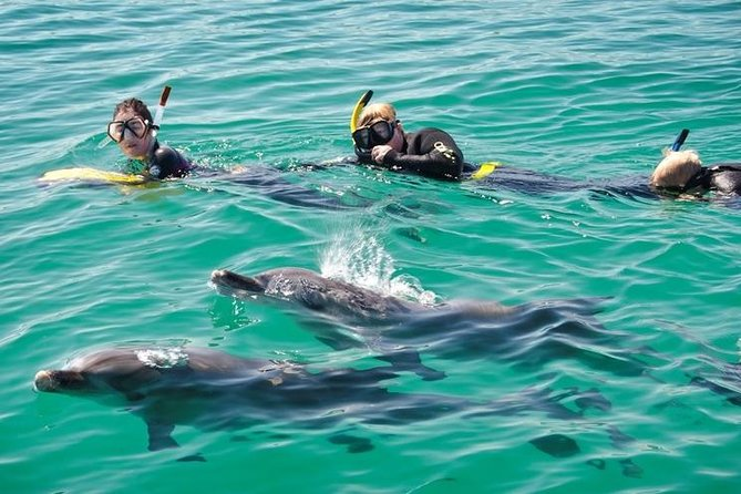 Swim with Dolphins Day Trip from Perth - Attractions Melbourne