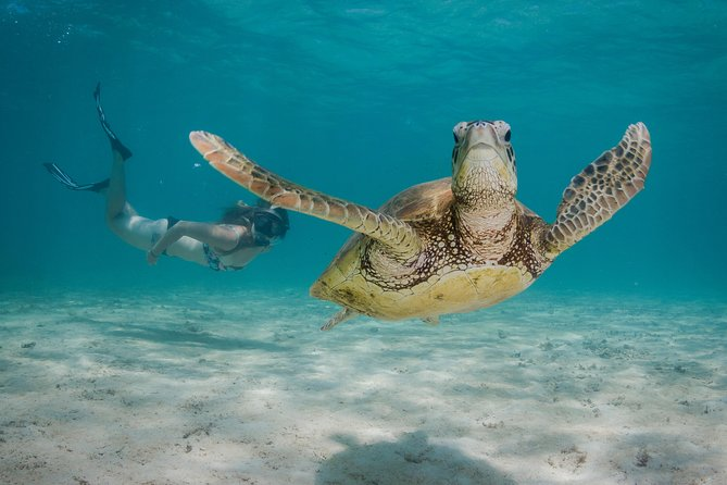Marine Life Discovery  Lagoon Snorkeling Tour from Exmouth - Attractions Melbourne