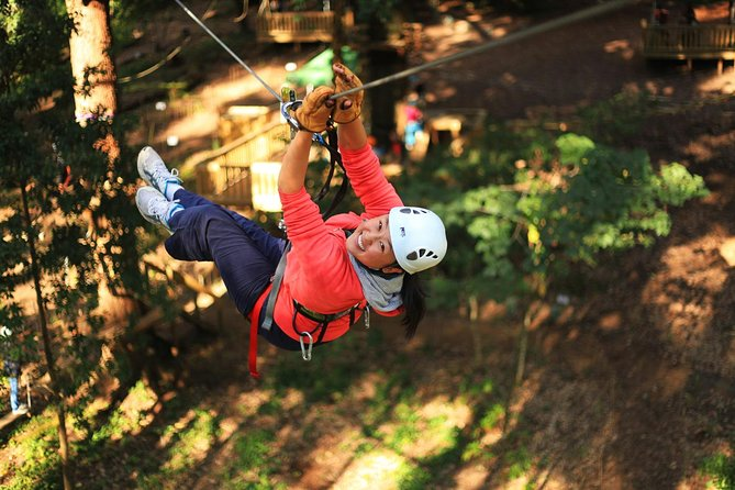 Trees Adventure Lane Poole Park - Treetop  Zipline Experience - Attractions Melbourne