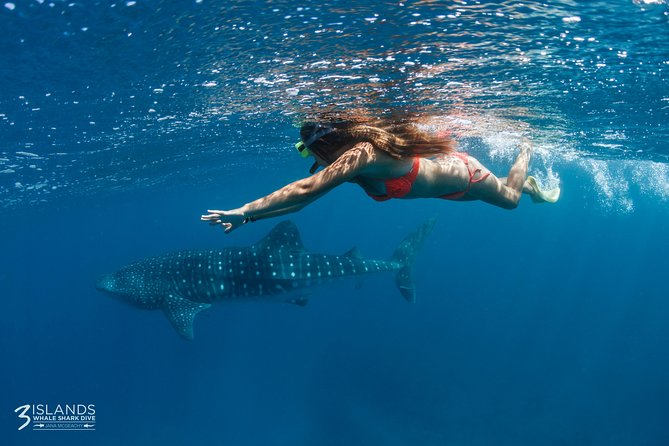 Swim with Whale Sharks - Ningaloo Reef - 3 Islands Whale Shark Dive - Attractions Melbourne