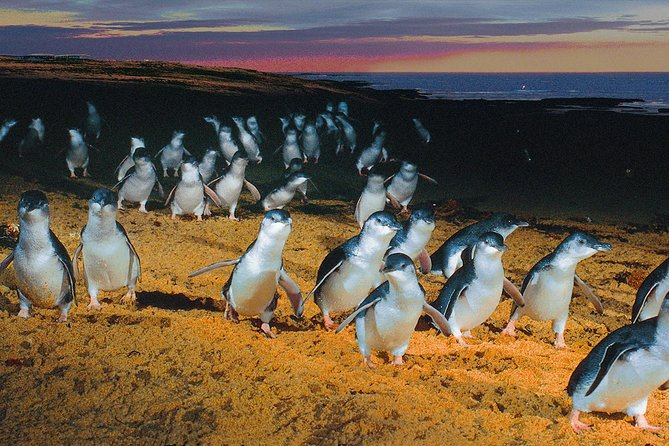 Phillip Island Tour from Melbourne - Attractions Melbourne