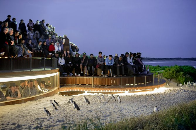 1 Day Private Phillip Island Tour VIP Charter up to 9 People - Attractions Melbourne