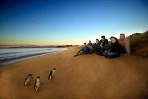 Phillip Island Ultimate Penguin Eco Tour or Skybox Experience - Attractions Melbourne