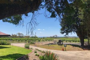 Beautiful Bellarine Discovery by Road to indulgence - Attractions Melbourne
