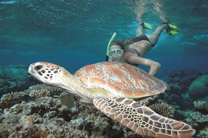 Great Barrier Reef Sailing and Snorkeling Cruise from Port Douglas - Attractions Melbourne