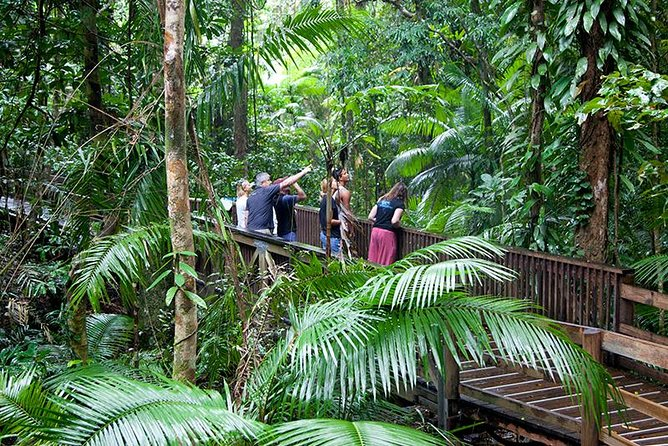 Full Day Daintree Rainforest and Mossman Gorge Tour - Attractions Melbourne
