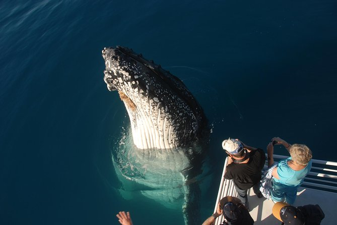 Whalesong Cruises - Hervey Bay Whale Watching experience - Attractions Melbourne