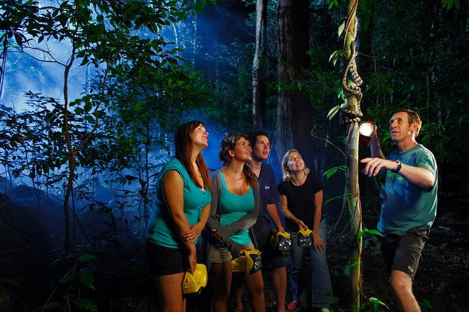 Daintree Rainforest Night Walk from Cape Tribulation - Attractions Melbourne