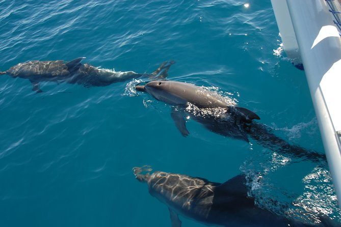 Fraser Island Sailing Adventure Cruise and Dolphin Watching from Hervey Bay - Attractions Melbourne