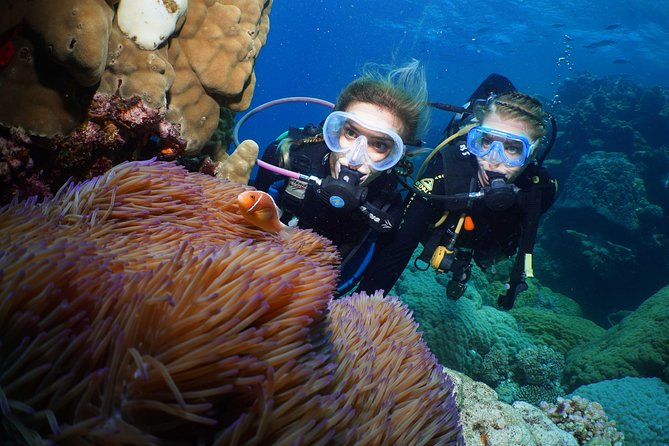 Quicksilver Dive 4 Day PADI Learn to Dive Course - Attractions Melbourne
