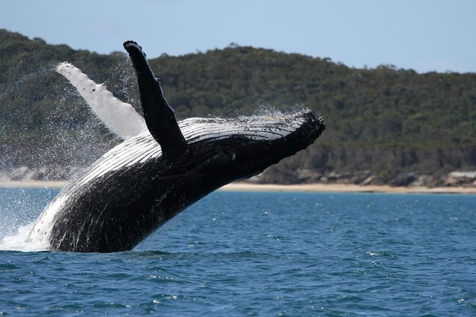 Hervey Bay Ultimate Whale Watching Cruise - Attractions Melbourne