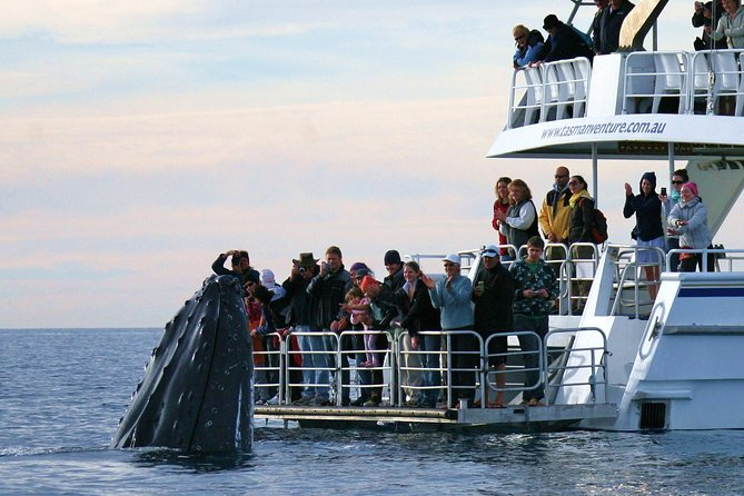 Hervey Bay Whale Watching Cruise - Attractions Melbourne