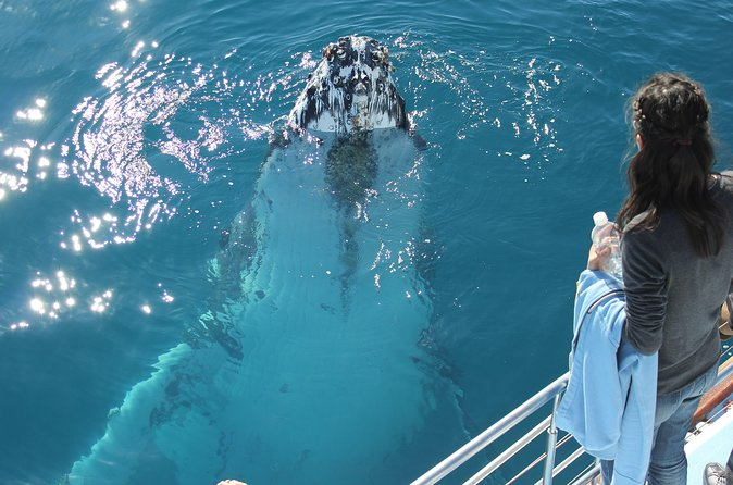 Hervey Bay Premium Whale Watching Cruise - Attractions Melbourne