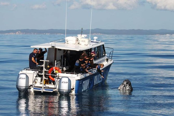 Hervey Bay Whale Swim and Watch - Attractions Melbourne
