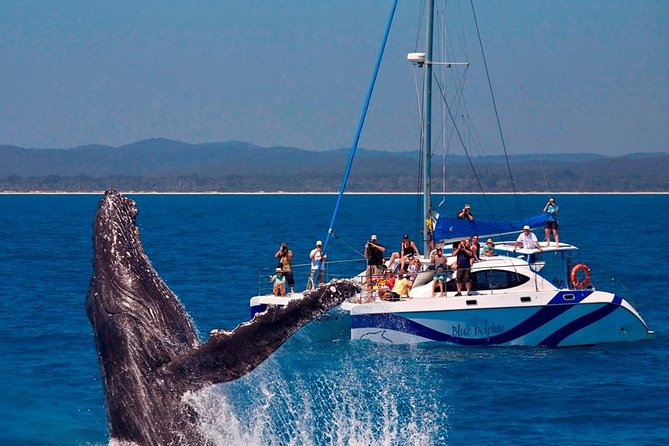 Blue Dolphin Small-Group Hervey Bay Whale Watching Cruise - Attractions Melbourne