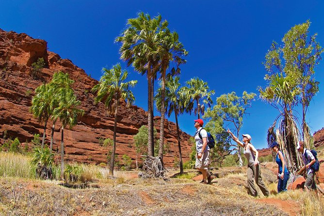 Palm Valley 4WD Tour from Alice Springs - Attractions Melbourne