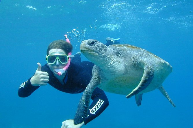 3-Hour Sea Turtle Snorkeling Experience in Byron Bay - Attractions Melbourne
