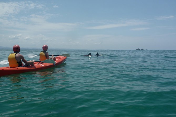 Kayaking with Dolphins in Byron Bay - Attractions Melbourne