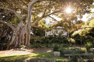 Wendy Whiteley's Secret Garden - Attractions Melbourne