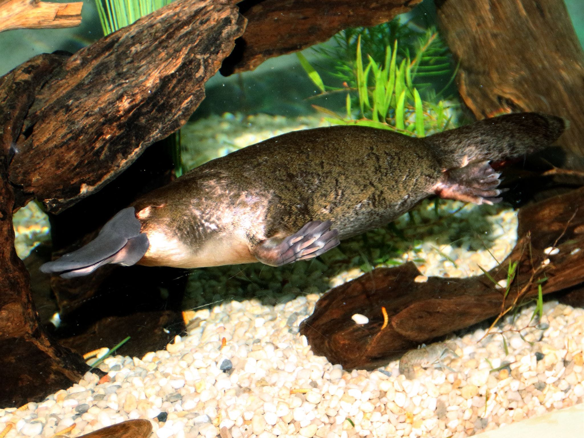 Platypus House - Attractions Melbourne