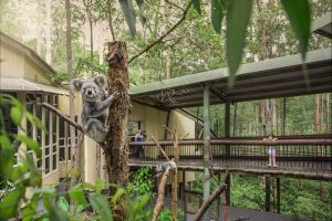 Daisy Hill Koala Centre - Attractions Melbourne