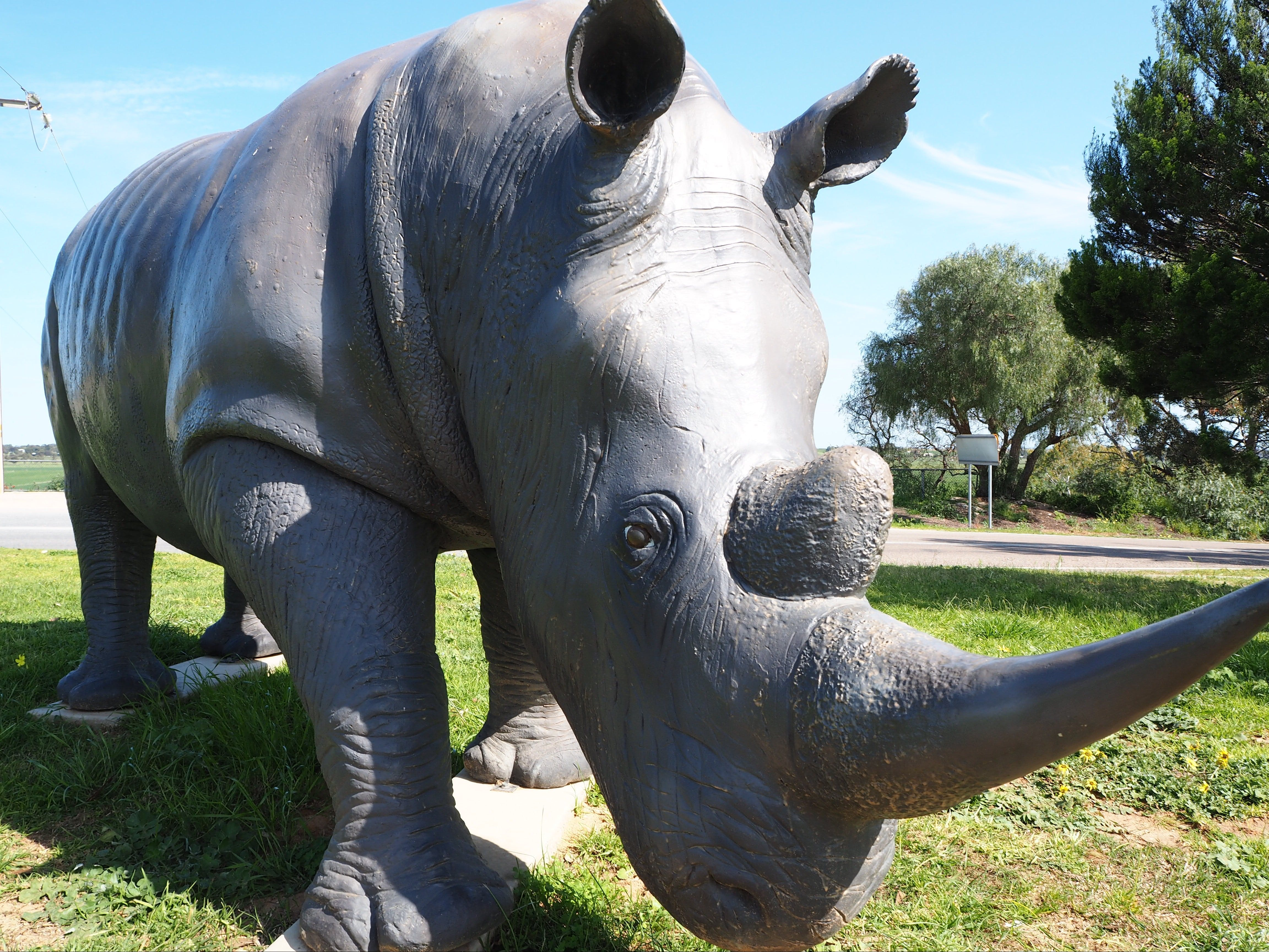 Tailem Bend Rhino Park and Dickson Reserve - Attractions Melbourne