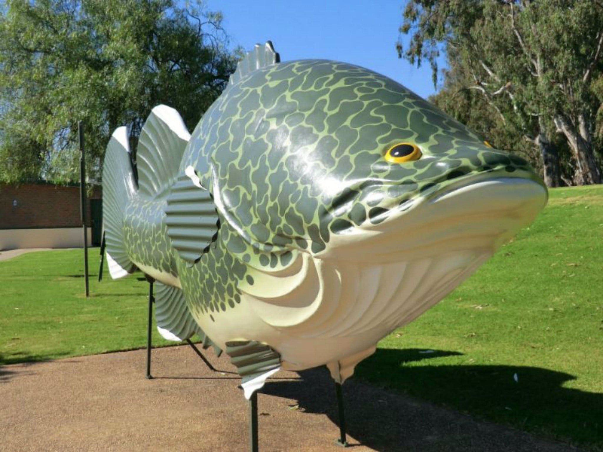 Big Murray Cod - Attractions Melbourne