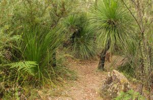 Grass Tree Circuit - Attractions Melbourne