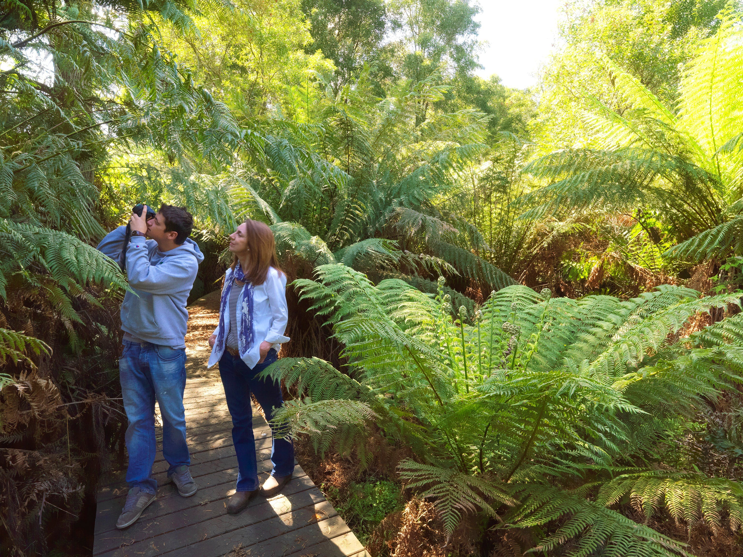 Endeavour Fern Gully Walks - Attractions Melbourne